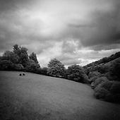 Woodland, Exmoor 2011