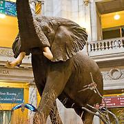 Smithsonian Natural History Museum, Washington DC