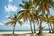 Beach and coconut palm trees at Pigeon Point Heritage Park on Tobago island, Trinidad and Tobago.