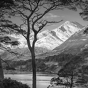 I was loving the roam through the ancient Caledonian forest that surrounds the Loch, the elegant and varied shape of the Scot's Pines created infinite possibilities to frame the mighty range of peaks on the far side.