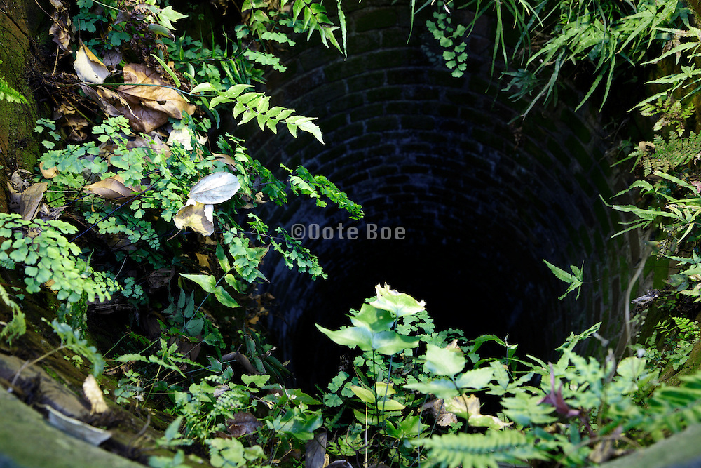 water well opening with green plants on the edge