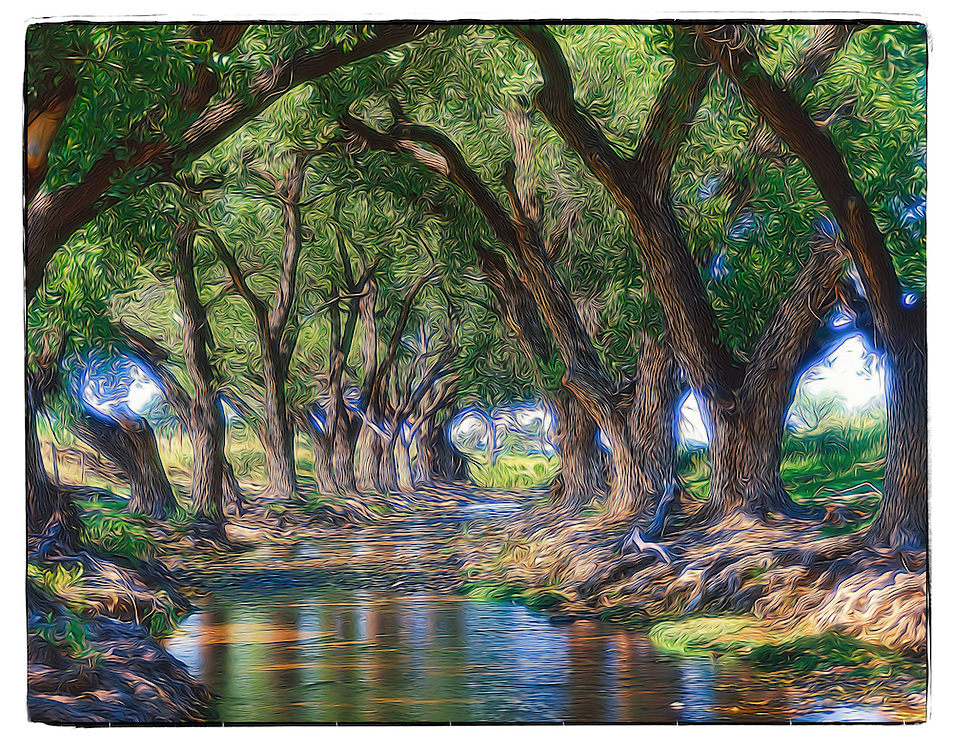 Cottonwood trees on Limpia Creek, Jeff Davis County, TX