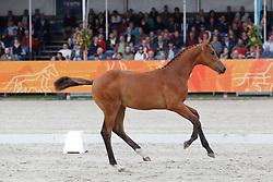 13 - Girisco<br /> KWPN Paardendagen 2011 - Ermelo 2011<br /> © Hippo Foto - Leanjo de Koster