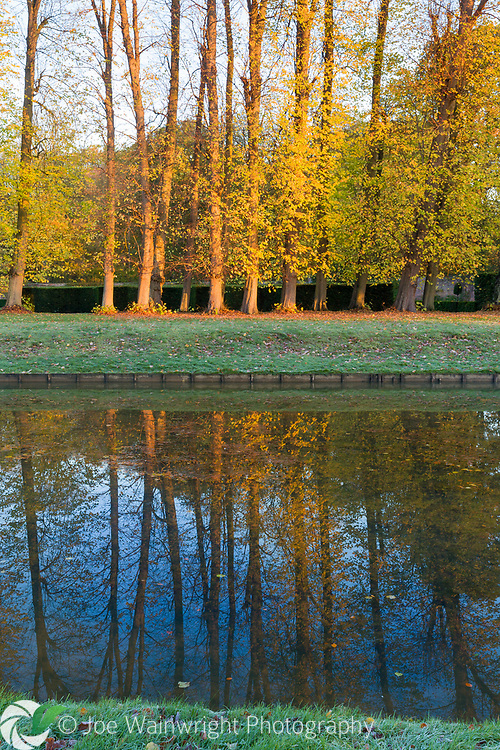 Autumnal lime trees lining the canal in the gardens of Erddig Hall, Wrexham, reflected in the water. Photographed in November
