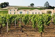 FRANCE, Saint Emilion<br /> Chateau Pavie (Premier Grand Cru Classé A) and its vineyards