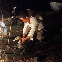 Asia, China, Guilin. Cormorants aid fishermen on the Li River.