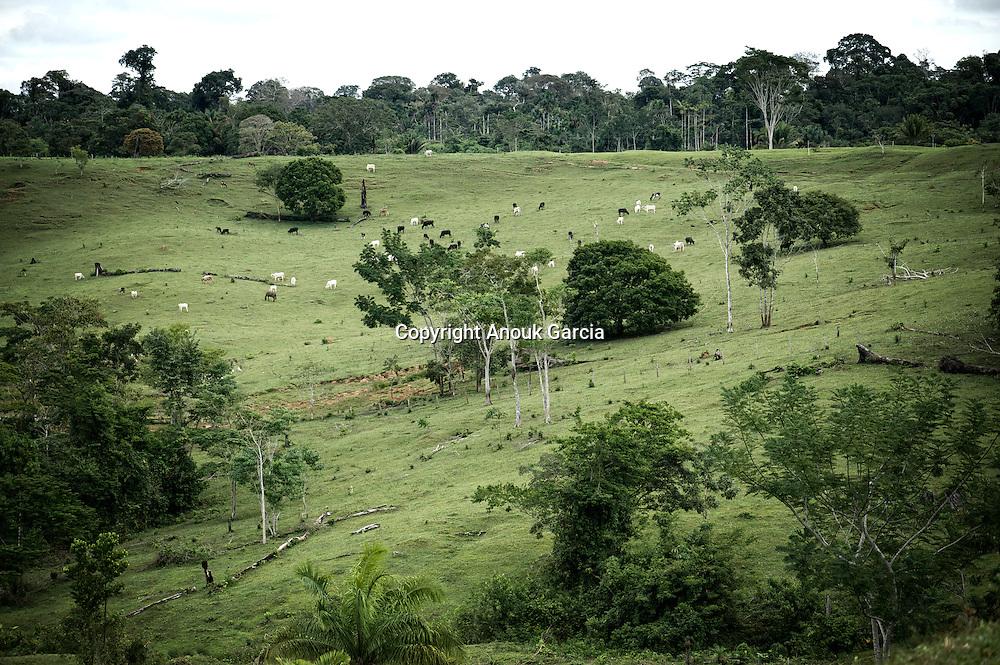 site du tequinho, les geoglyphes étaient en général construit sur les terres fermes et en hauteur.