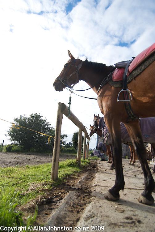 Pharl Lap Horses Racing equestrian Sports Sea Bisuit