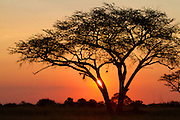 Sunset at the Hwange National Park in Zimbabwe.
