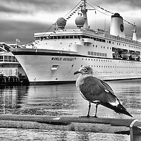Seagull with the MV World Odyssey in the background. San Diego Harbor, California. Waiting for the Semester at Sea, Spring 2016 Voyage to begin. Nikon 1 V3 camera and 10-30 mm VR lens (ISO 200, 24 mm, f/10, 1/125 sec). Image Processed with Capture One Pro, Focus Magic, Google Silver Efex 2 Pro, and Photoshop CC.