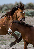 Wild Horses Colorado