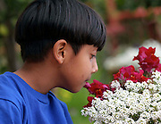 young male child  smelling flowers