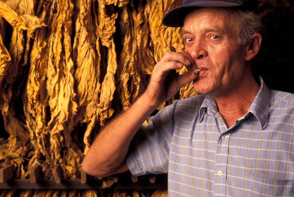 Canada, Ontario, (MR) Louis Keursten smokes cigarette by rows of drying tobacco leaf at farm in town of Simcoe