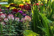 20180608_home_cu_minns_gardens_red_tailed_hawks_diane_duthie_designs_