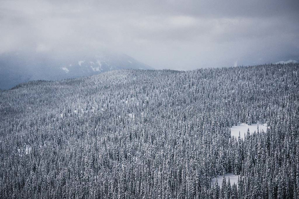 Aerial view of the forest above the Telkwa River, British Columbia.