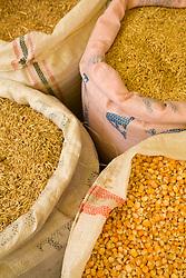 Husked corn kernels for sale in market, Cuenca, Ecuador, South America