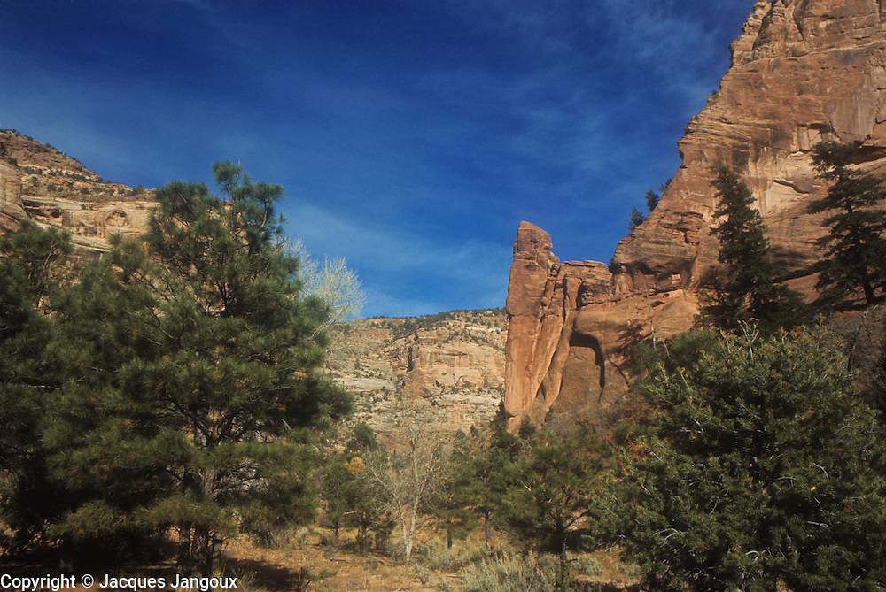 Canyon del Morto in Canyon de Chelly National Monument, Arizona, USA. Cliffs and coniferous trees.