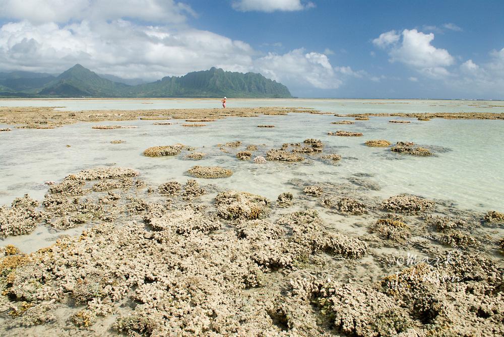 Woman walking among reefs at low tide, Kaneohe Bay, Hawaii