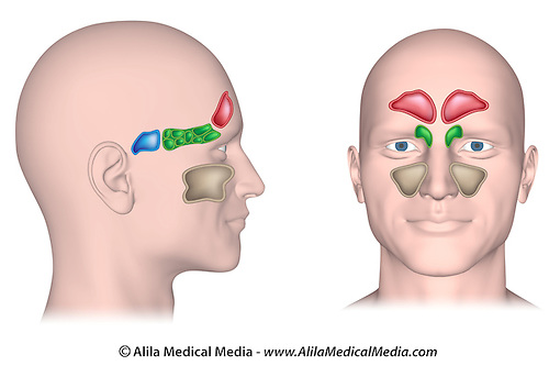 Nasal Diagram Unlabeled Enthusiast Wiring Diagrams