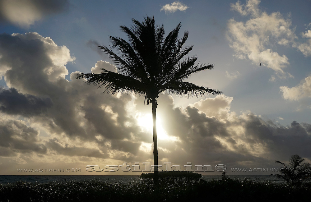 Silhouette of palm tree in Florida.