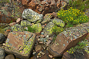 Lichens on rock<br />