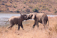 Pilanesberg Game Reserve and National Park