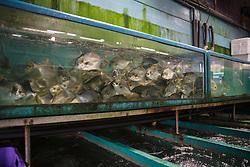 Fresh fish in aquariums at the Hong Kong Fish Market in China.