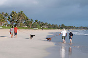 Two couples walk their dog along Kailua Beach.