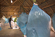 Bananas arrive to the entry of the pack house in a blue plastic cover and are prepared by the workers.