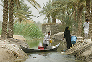 Marsh Arabs, Southern Iraq.<br /> Picture date: Wednesday April 16, 2003.<br /> Photograph by Christopher Ison &copy;<br /> 07544044177<br /> chris@christopherison.com<br /> www.christopherison.com