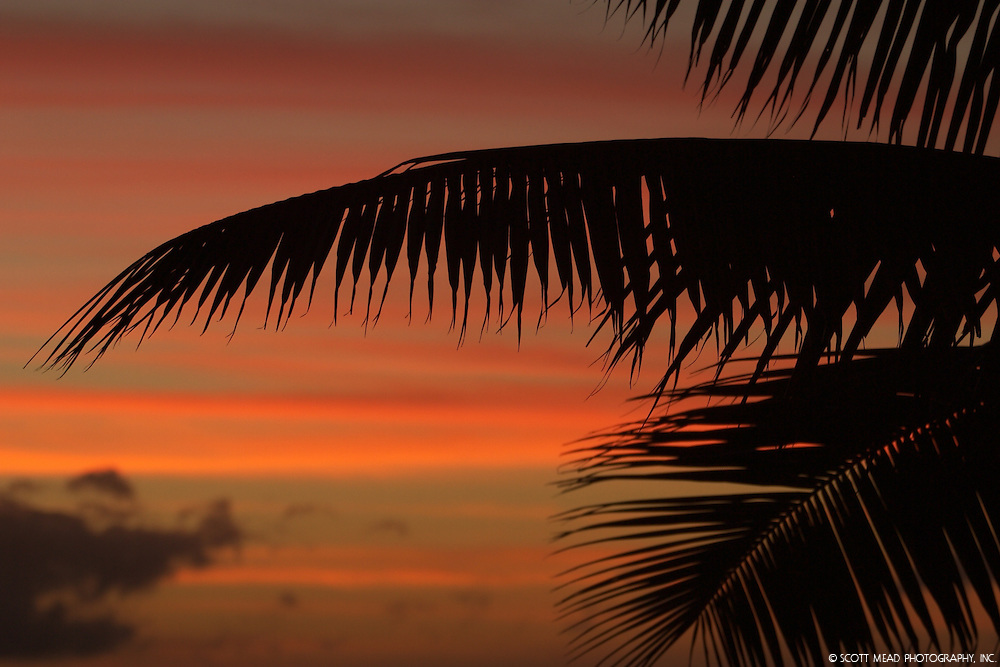 Silhouette of palm fronds, leaves, during twilight sunset, from West Maui, Hawaii