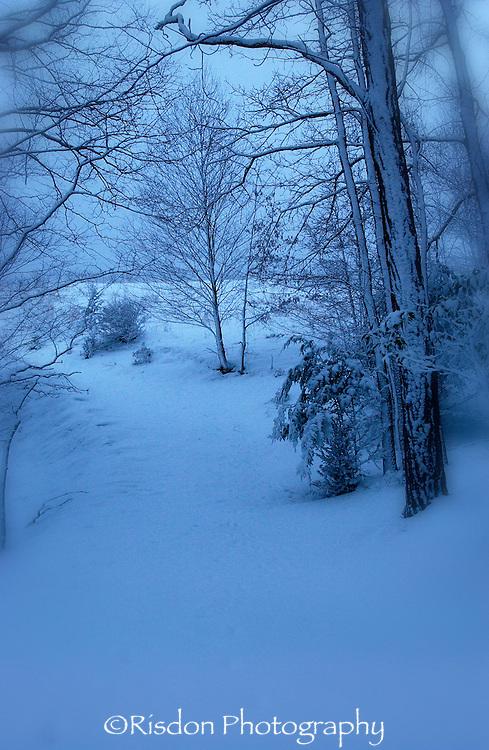 Blue snow scene