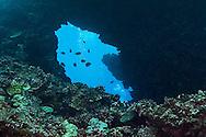 Swim Through First Cathedral, Lanai Hawaii