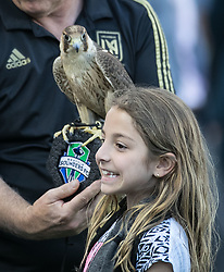 April 29, 2018 - Los Angeles, California, U.S - LAFC fan poses with hawk during opening game festivities prior to the MLS game between the LAFC and the Seattle Sounders on Sunday April 29, 2018, their first game at the Banc of California Stadium in Los Angeles, California. LAFC defeats Sounders, 1-0. (Credit Image: © Prensa Internacional via ZUMA Wire)