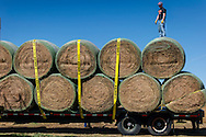 OSU preparing to haul large round bales of hay to victims of grass fires in northwest Oklahoma.