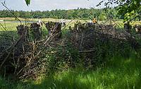 TILBURG - Houtwal De Leij.  PRISE D'EAU GOLF, golfbaan.  COPYRIGHT KOEN SUYK