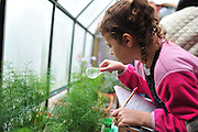 Charity Garza, a second grade student at Mitchell Elementary, uses a magnifying glass to look at a catapiller in the new butterfly garden at the Holifield Science Learning Center in Plano on Wednesday, April 10, 2013. (Cooper Neill/The Dallas Morning News)