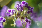 Purple flower Artistic macro