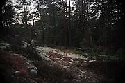 Picture shows woods around L&ouml;kholmen, West Sweden, 21st December 2013<br /> <br /> Credit should read: Picture by Mark Larner