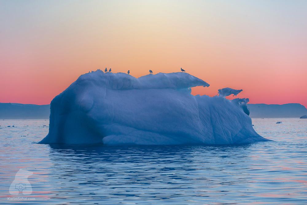 Birds on an iceberg at dusk, Ilulissat, Greenland.
