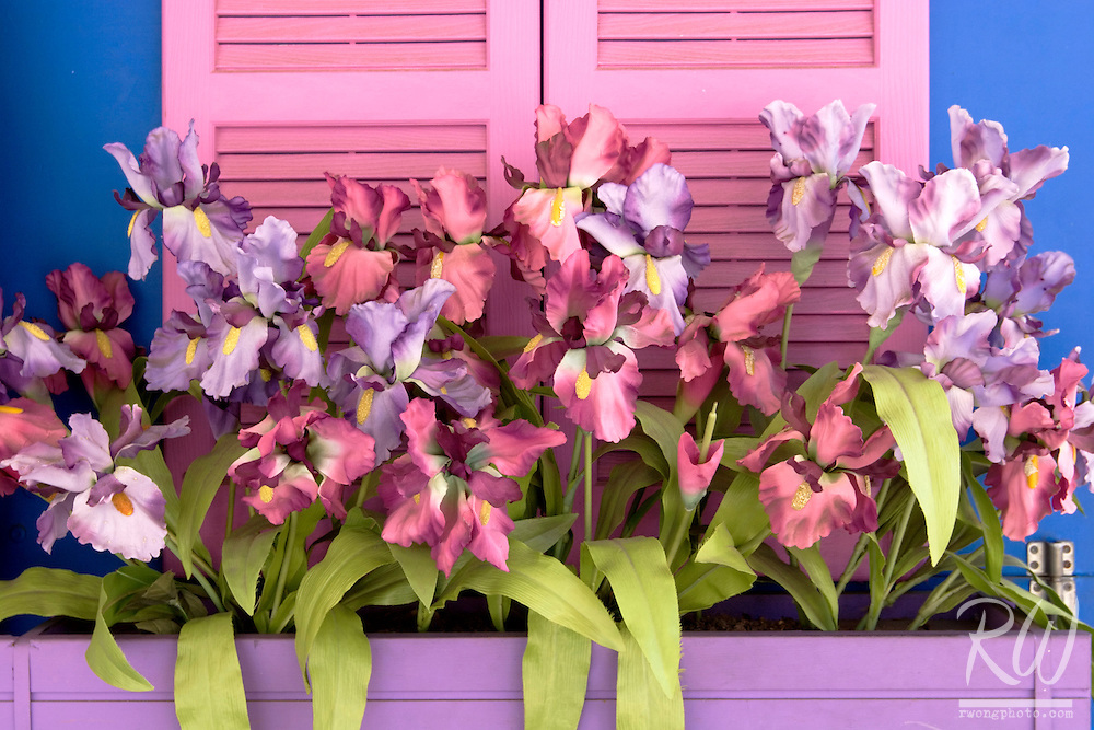 Bearded Iris Silk Flowers at Balboa Park Spanish Art Village, San Diego, California