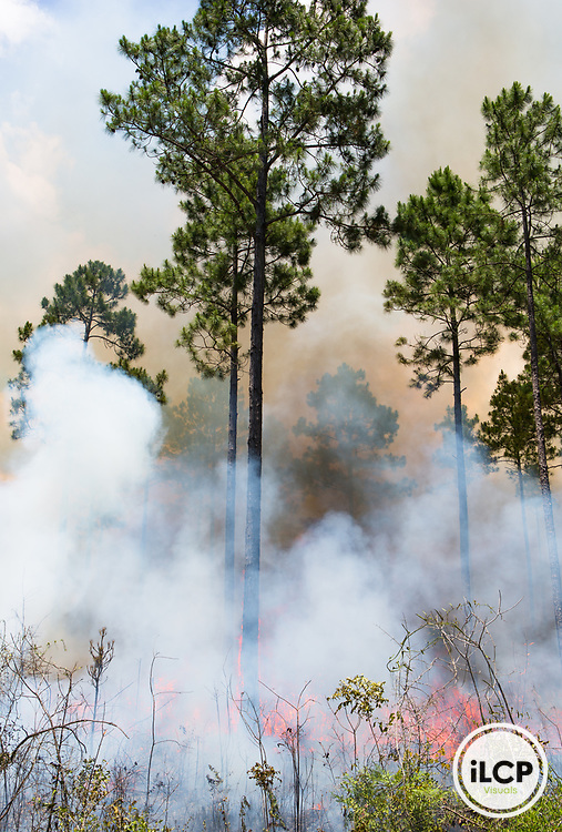 Prescribed fire on the Nokuse Plantation, Florida.