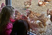 Nededrland, Ewijk, 1-4-2013Kippenfarm Het Rondeel. Het Rondeel is een diervriendelijk huisvestingsconcept voor leghennen. waarbij gezocht is naar een duurzame toekomst voor de legpluimveehouderij. Een ideale werkomgeving voor de pluimveehouder en leghennen. Dit welzijnsvriendelijke houderijconcept voor pluimvee is bekroond met drie sterren voor het Beter Leven-kenmerk van de Dierenbescherming. Foto: Flip Franssen/Hollandse Hoogte