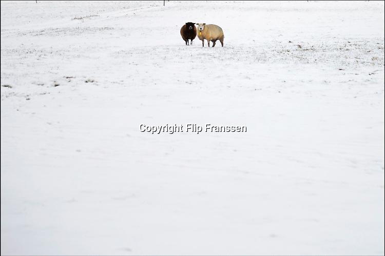 Nederland, Culenborg, 28-12-2014Schapen in een besneeuwd weiland op een koude dag. Het is een donker, zwart, en licht, wit schaap .Foto: Flip Franssen