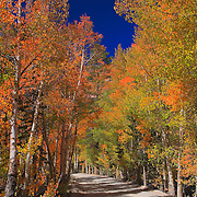North Lake Road - Fall Color
