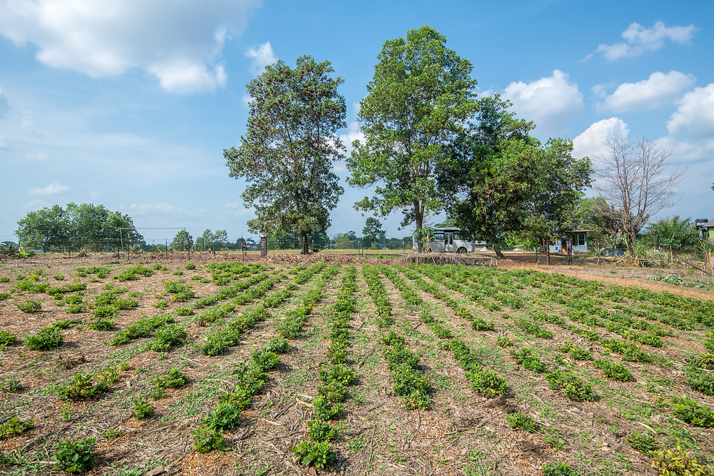 Rows of crops are in the foreground of a farm in Ganta, Liberia