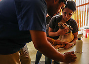 Dr. Ruiz and his assistant Nicole sedate a dog for sterilization surgery at the spay and neuter clinic in Yabucoa, Puerto Rico.