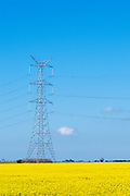 Power line transmission tower in field of flowering canola crop in rural country Victoria, Australia <br />