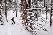 Skiers on a winter ski tour in the San Juan Mountains of SW Colorado near Telluride, Colorado.