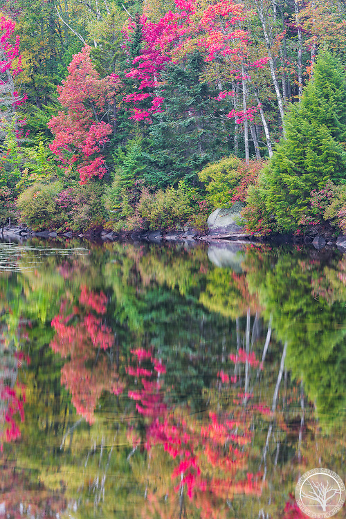 Fall foliage at Kettle Pond, in the Groton State Forest, Groton, Vermont.